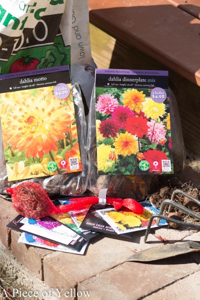 What I'm Planting Spring 2015